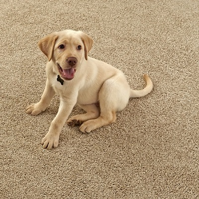 Stainmaster Carpet Deal